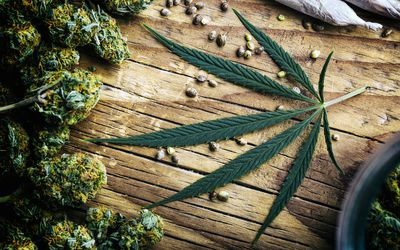 Get to Know How to Identify Cannabis Sativa